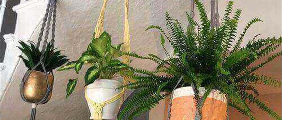 Macrame Plant Hangers at If Coffee Bar